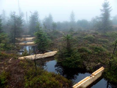 Do Jizerských hor vysadí tisíce původních stromků