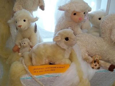 Ráj oveček v semilském muzeu!