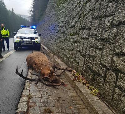 Policisté apelují na řidiče, aby dávali pozor na zvěř v říji