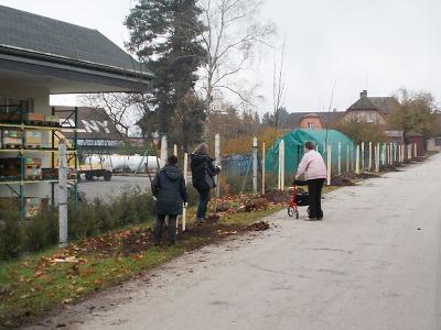 U nádraží v obci Horka u Staré Paky vyrostla alej z jeřábů