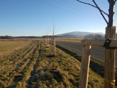 Liberecký kraj nadále pokračuje v péči o aleje