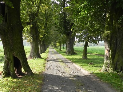 Liberecký kraj bude pokračovat v úpravách významných alejí