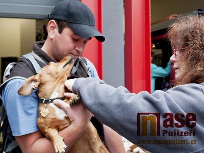 Očkování psů proti vzteklině bude v Turnově probíhat 18. září