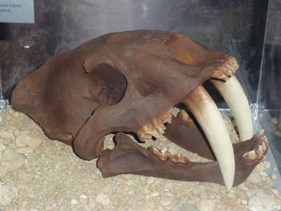 Zkamenělé stopy aneb Po stopách dávných živočichů