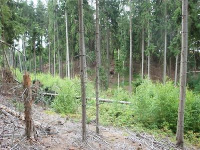 Firma Forestman neobnovila les u Vlastibořic, dostala pokutu 280 tisíc