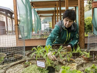 Vrchlabská genofondová banka se stala členem Unie botanických zahrad