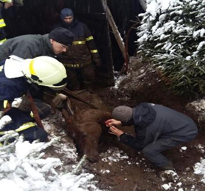Pád do bahna v Lučanech se stal pro koně osudným