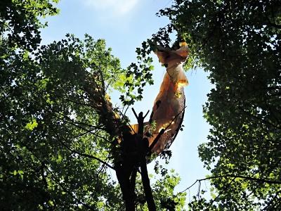 Hasiči vyprošťovali paraglidistu na Kozákově z koruny javoru