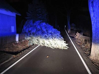 Hasiči odstraňovali po nedělním větru popadané stromy