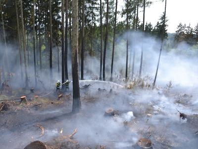 Hasiče zaměstnal rozsáhlý požár lesa ve Studenci
