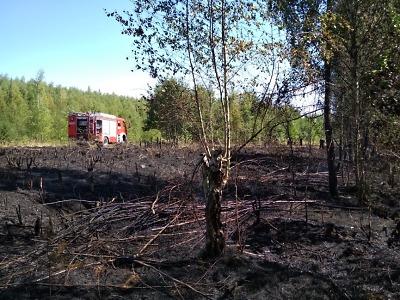 Hasiči zasahovali u deseti požárů, aktuálně hoří les ve Svojku