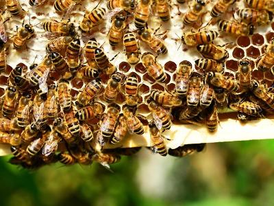 Hasiči radí, jak postupovat v případě ohrožení nebezpečným hmyzem