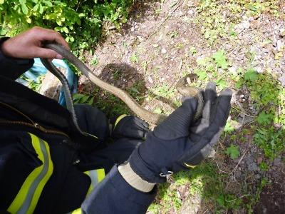 Hasiči vyráželi pro anakondu, ale našli jen užovku