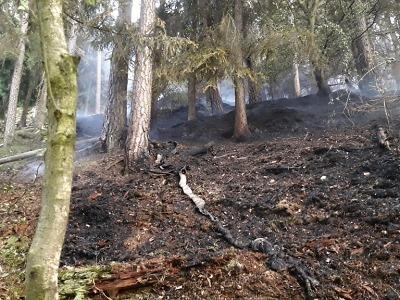 Kvůli rozsáhlému požáru lesa aktivovány hasičské jednotky 3. stupně
