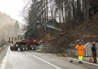 Nebezpečné stromy podél cest v Krkonoších musí k zemi