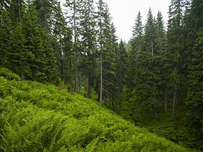 Slavíme světový den lesů a světový den vody