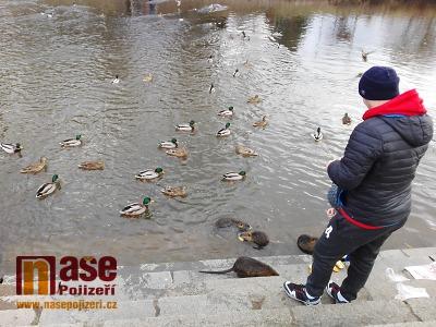 Obrazem: O svátcích se lidé vydali na procházky i krmit kachny