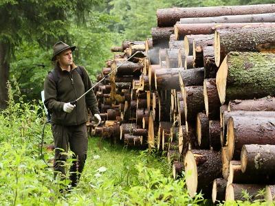 Správa KRNAP letos zpracovala 52 000 m3 kůrovcem napadeného dřeva