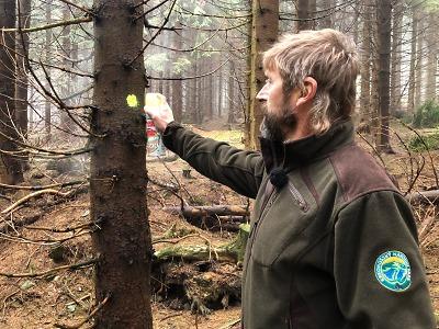 Skauti pomůžou národnímu parku s přemnožením kůrovce
