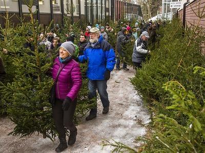 Po 150 vánočních stromcích s certifikátem FSC se jen zaprášilo