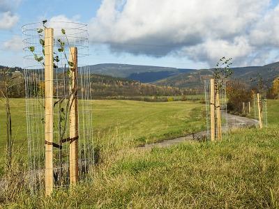 Správa KRNAP vrací ovocné stromy zpět do krajiny