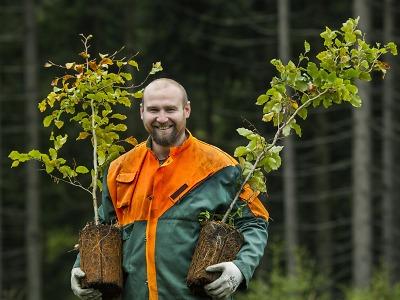 Krkonošské lesy doplnilo skoro 40 tisíc stromků chybějících druhů