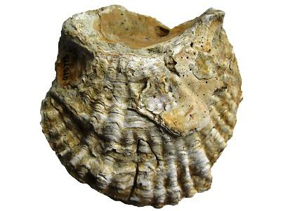 Zkameněliny ukazují archiv života