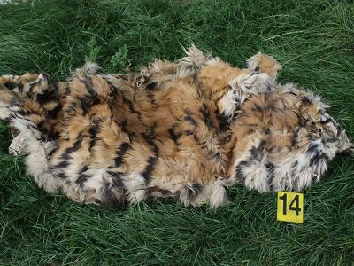 Vyšetřovatel v tygří kauze již předal návrh na podání obžaloby