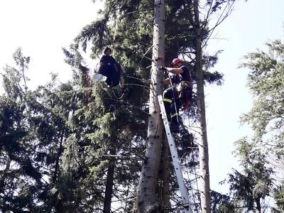 Paraglidisté uvízli na stromech pod Kozákovem