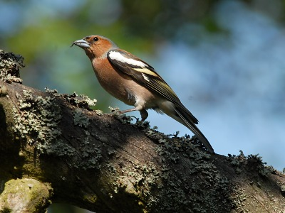 Co nám to zpívá na zahradě aneb Zpěv ptáků kolem nás