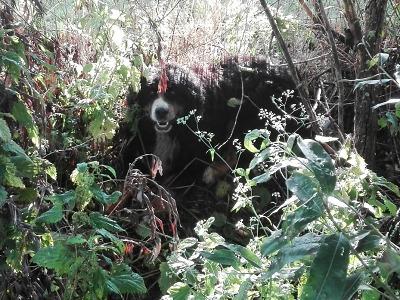 Bernský salašnický pes blokoval D10, pak se nechal uplatit klobásami