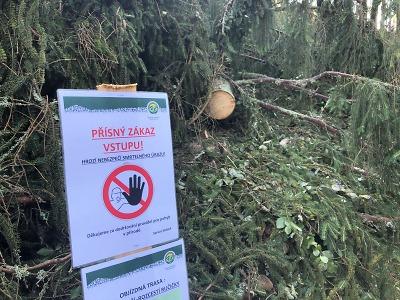 Bilance středeční bouřky v Krkonoších: 20 000 m3 poničeného dřeva