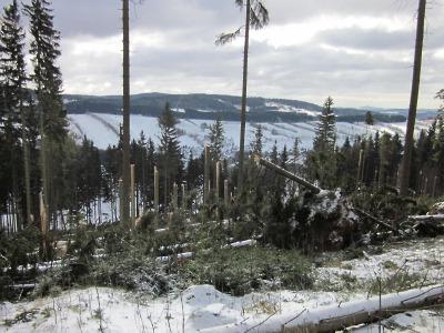 Víkendové sněžení způsobilo polomy v lesích na Rokytnicku