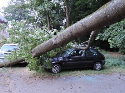 Spadlé stromy blokovaly silnice a ničily auta