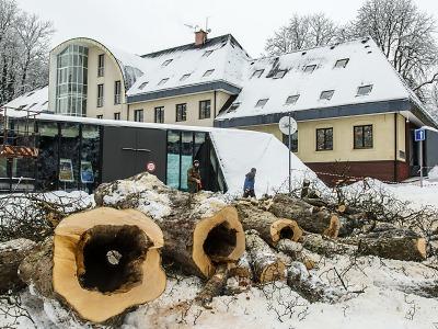 Správa KRNAP provádí havarijní kácení v zámeckém parku ve Vrchlabí