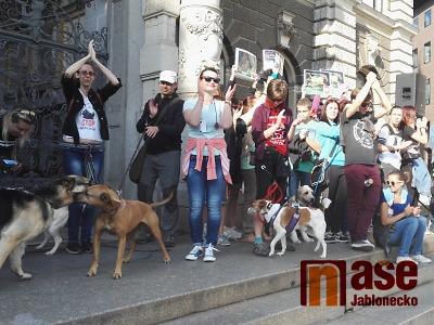 V Liberci lidé demonstrovali pro tvrdší tresty za týrání zvířat