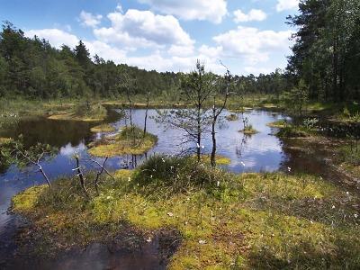 Přírodní památka Swamp je domovem pro řasy, motáky i ledňáčky