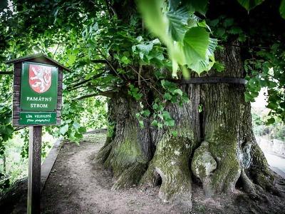 Tisíciletá lípa v Tatobitech soutěží o titul Evropský strom roku 2016