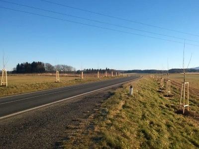 Silnice lemují nové stromy, kraj jich letos vysadil přes čtyři sta