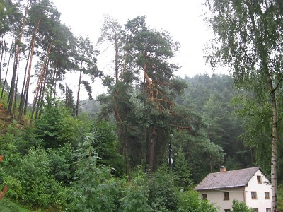 Lesy na Turnovsku trápí kůrovec, úřady vyzývají vlastníky k prevenci