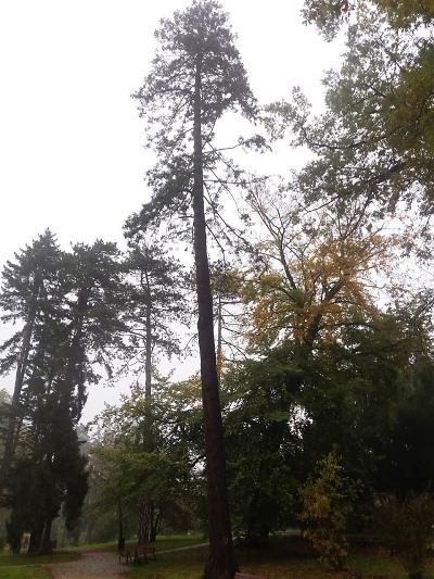 Pokácí osm dřevin v Metelkových sadech v Turnově