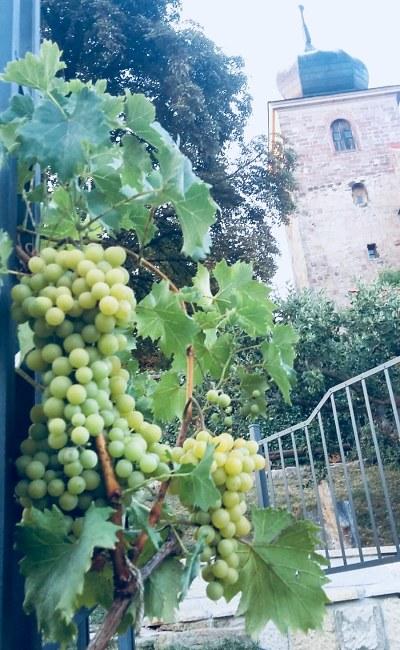 První Železnické slavnosti vína oslaví v Café Terasy