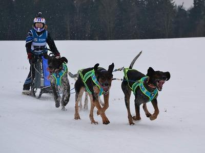 Šampionát v závodech psích spřežení úspěšně proběhl v Zásadě