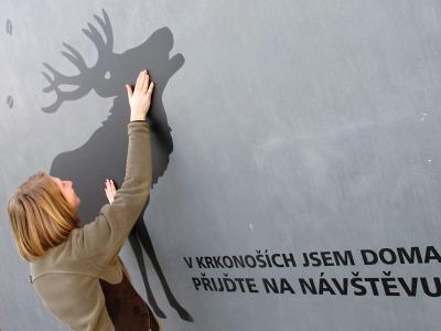 Divoké řvaní v Krkonoších není medvěd, ale jeleni v říji!