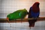 FOTO: Chovatelé zvou na výstavu vzácných exotů