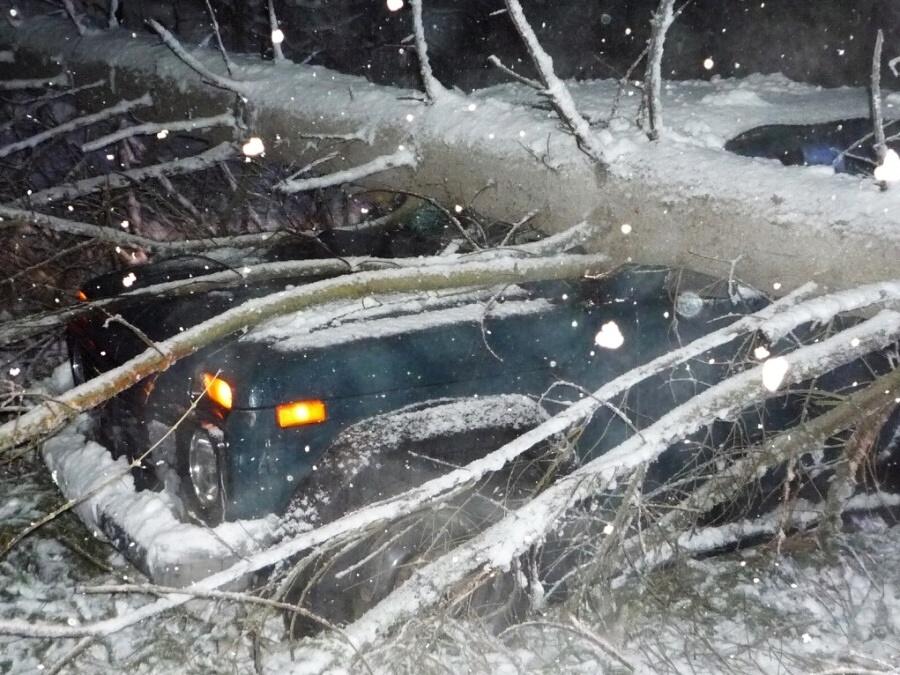 V noci z pondělí na úterý díky mokrému sněhu opět padaly stromy