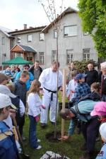 Judisté sázeli japonskou sakuru před Domem dětí a mládeže v Semilech
