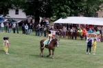 8. ročník Dne koně v Lomnici nad Popelkou