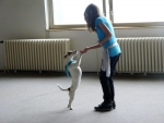 Stříbro z pražského Freestyle dogdancingu získala dvojice ze Semil