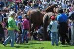 Děti podlézají indiánské koně Václava Vydry